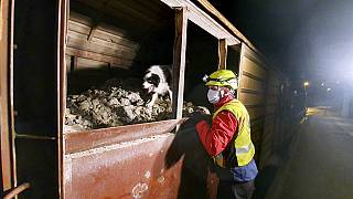 A rescuer and a dog look for migrants and refugees inside a cargo train in Dobova, Slovenia in March 2020