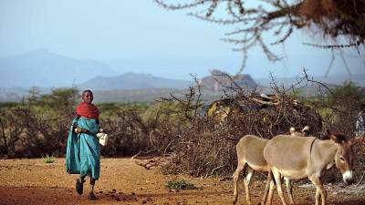 Kenya court rescinds ban on sale of donkey meat