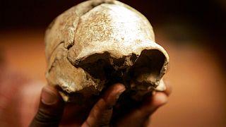 Kenya'da bugüne kadar 1000'den fazla insan fosili keşfi yapıldı. Bu rakam diğer Afrika ülkelerinden çok daha fazla.