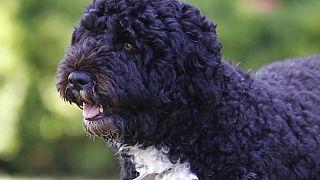 """رحيل أحد نجوم البيت الأبيض بعد صراع مع مرض السرطان.. نفوق """"بو"""" كلب أسرة أوباما"""