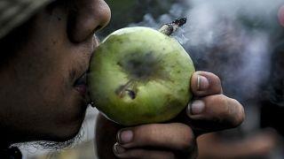 عشاق القنب في كولومبيا