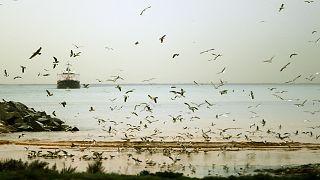 الشاطئ اللبناني شمال العاصمة بيروت