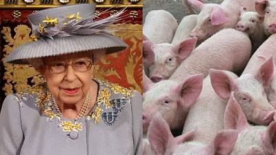Animal welfare leglisation will make up some of the 30 new laws announced by Her Majesty