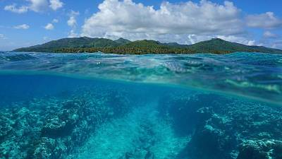 Ocean are crucial stores of blue carbon and the most biodiverse spaces on the planet