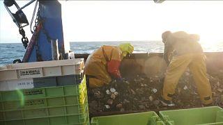 Streit um Fanggründe vor Jersey: Französische Fischer in Not