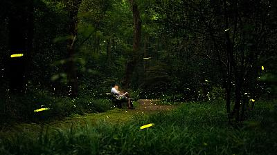 The chemical reaction in fireflies has inspired a new portal bioluminescent device.