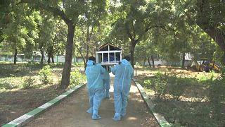 الهند - وباء