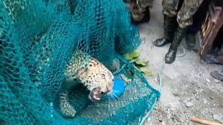 Mensch gegen Leopard