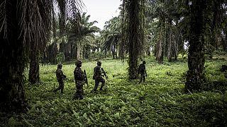 RDC : plus de 20 présumés rebelles ADF tués en 10 jours, selon l'armée