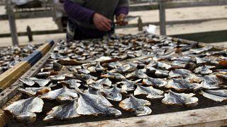 Un pescador pone a secar caballas en el pueblo pesquero de Nazaré, Portugal.