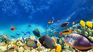 Sostenibilità degli oceani ed economia alleate: il progetto di Ocean Panel