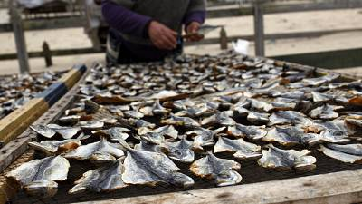 A fisherman lays out mackerel to dry in the fishing village of Nazare, Portugal. February 8, 2014.