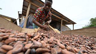 Côte d'Ivoire : 22 personnes condamnées pour traite d'enfants dans le cacao