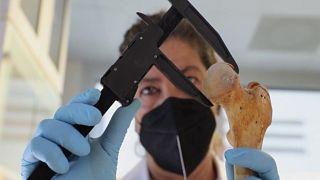 Kolomb'un ve aile üyelerinin kemik kalıntıları ölçülüyor