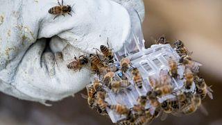 A méhek világnapja van