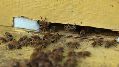 Bees, the workers helping to create a sweet sustainability in Europe