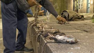 A night with New York's rat hunters