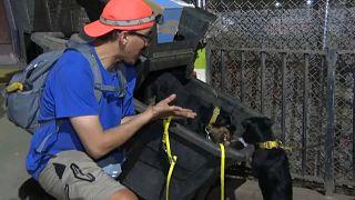 Ein Hobby-Rattenfänger und seine zwei Hunde haben eine Ratte in einer Mülltonne aufgespürt - und schon am Schlafittchen gepackt