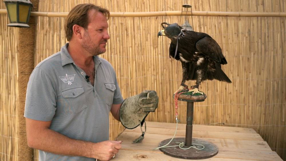 Perangkat pelatihan elang baru 'BerghWing' bertujuan untuk merevolusi olahraga