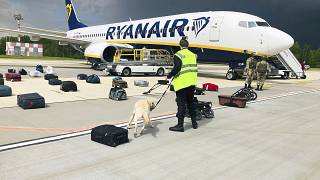 Bombakereső kutya vizsgálja át a földre kényszerített repülőgép utasainak csomagjait a minszki repülőtéren 2021. május 23-án
