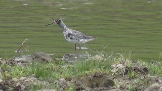 En busca del equilibrio ecológico en el delta de Iasi, hábitat de miles de aves