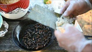 طاه في العاصمة الأمريكية يحضر سوشي حشرات السيكادا