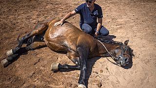 Morocco: Equestrian choreographer awaits resumption of filming