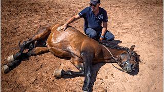 مصمم مشاهد سينمائية يهمس في أذن الخيول في المغرب