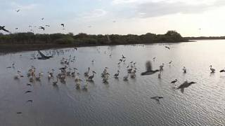 Soudan : la réserve de Dinder, un paradis faunique menacé