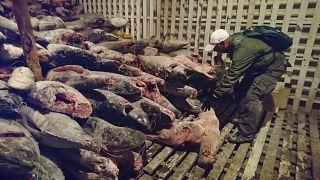 Çinli balıkçı filosunun ABD'ye ithalatı