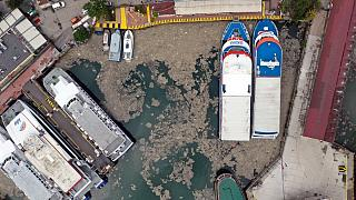 Marmara Denizi'nde deniz salyası sorunu