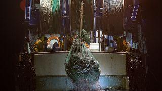 «هفتهٔ سبز اروپا»؛ چرا صید کفروبانه و زیادهماهیگیری ویرانگر است؟