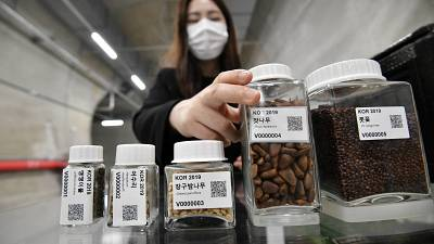 a researcher displaying seed samples in a tunnel at the Baekdudaegan National Arboretum Seed Vault Centre in the southeastern mountainous county of Bonghwa.