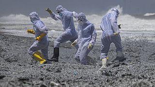 Sri Lanka açıklarında bir kargo gemisinde çıkan yangın sebebiyle birçok asker kıyıya vuran kimyasal maddeleri temizliyor.
