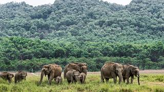 عکس تزیینی از فیلهای آسیایی
