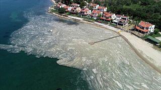 Marmara Denizi'nde görülen 'deniz salyası' müsilaj.