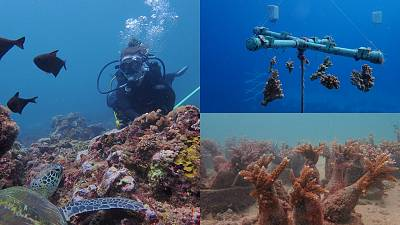 Recycled glass bottles are used to make a structure to plant baby corals onto