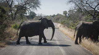 Elefantes paseando por el Parque Nacional Kruger de Sudáfrica