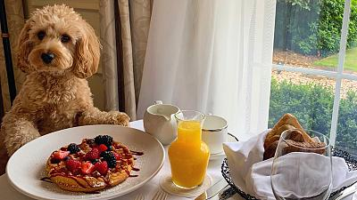 The most luxurious dog-friendly breakfast you can imagine.