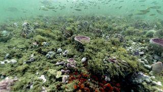 Fundo marinho ao largo da Geórgia, EUA