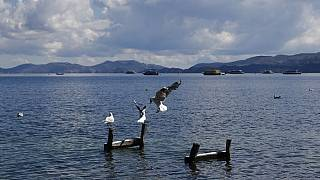 Seagulls perch on wooden posts