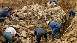 محققوا محكمة جرائم الحرب الدولية يزيلون التراب عن جثث عشرات ضحايا مجزرة سريبرينيتسا الذين دفنوا في مقبرة جماعية شمال شرقي توزلا. 1996/09/18