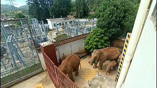 Elefántcsorda kóborol Kínában