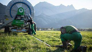 Öntözés egy svájci farmon Bad Ragazban 2020. április 13-án