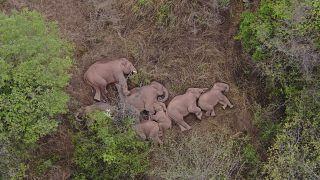 الفيلة في قيلولة