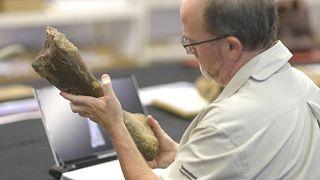 اكتشاف حفريات تعود لأكبر ديناصور مشى على سطح القارة الأسترالية