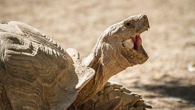 Burkina Faso : plus de 500 tortues saisies par les douanes