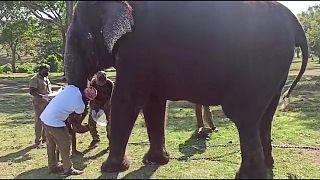 إخضاع 28 فيلا لفحص كورونا في الهند إثر نفوق لبؤة بسبب الفيروس