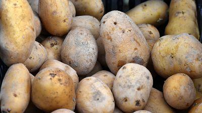 Kenya's authority to begin crackdown on unregistered potato dealers