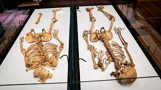 DNA analizleri sonucu akraba oldukları anlaşılan iki Viking savaşçısı Danimarka'nın başkenti Kopengah'da sergilenecek